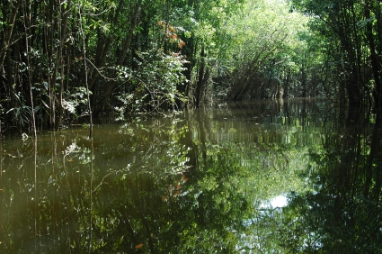 Rainforest flooded by Amazon river