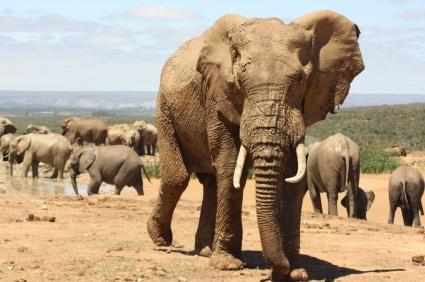 Afrikas faszinierende Tierwelt umfasst eine unglaubliche Vielfalt. (Quelle: istockphoto)