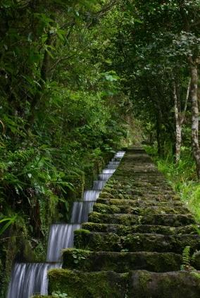 Die Levadas sind ein ausgeklügeltes Bewässerungssystem für die ganze Insel. (Quelle: istockphoto)