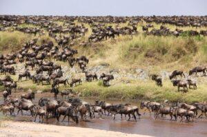 Die Gnu-Wanderung (Quelle: Fotolia)