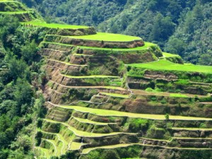 Reisterrassen von Banaue (Quelle: istockphoto)