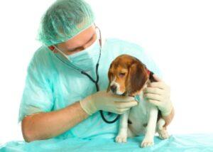 Eine Untersuchung beim Tierarzt ist notwendig. (Quelle: istockphoto)