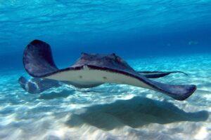 Schwimmen mit den Stachelrochen (Quelle: Fotolia)