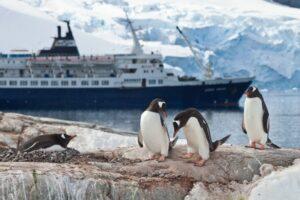 Pinguine und im Hintergrund ein großes Schiff