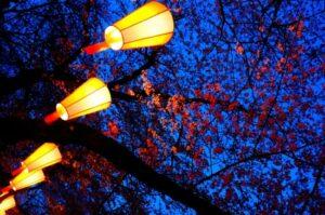Kirschbäume beleuchtet